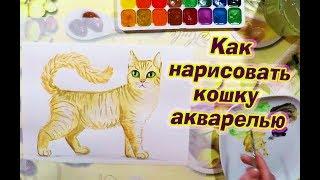 Как нарисовать кошку акварелью