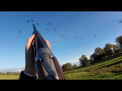 Powis Castle Nov 2014 - Superb birds - Shocking misses