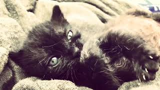 Cute cat compilation 2018    FULL HD 1080P