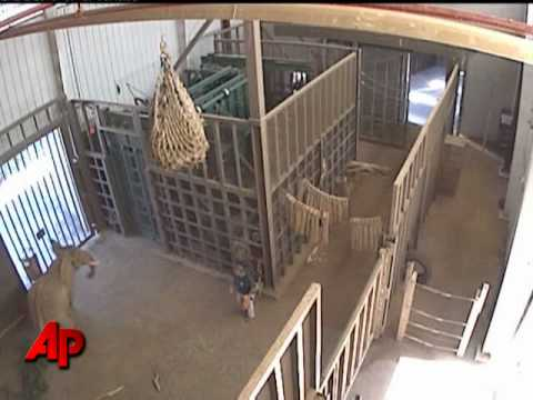 Raw Video: Elephant Charges, Injures Trainer