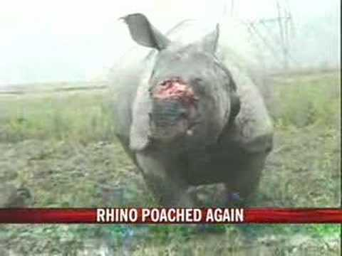 One more rhino is dead in Kaziranga. Barley a month into the New Year, five rhinos have already succumbed to the poachers. So much so, the situation in the N...