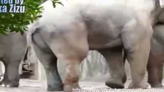 Download funny animals sex 3Gp Mp4