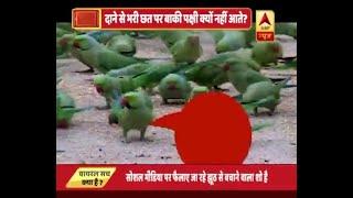 देखिए, वृंदावन के रहस्यमयी तोते का   ABP News Hindi