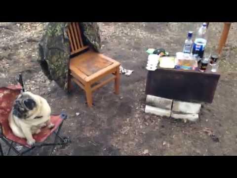 Мопс Эдик пригласил друзей на пьянку в деревне