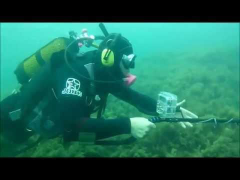Дайвинг в Крыму Поиск золота на Чаше любви    YouTube