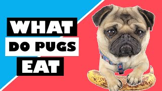 WHAT DO PUGS EAT? PUG DIET, DOG TREATS, VEGETABLES, FRUITS, BANANA MILKSHAKE and PUG HEALTH