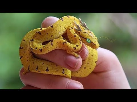 6 Einzigartigste Exotische Reptilien Der Welt!
