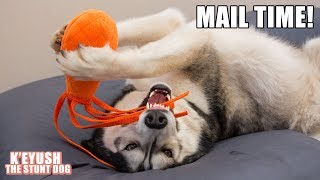 Husky Receives A GoPro Gimbal | Mail Time