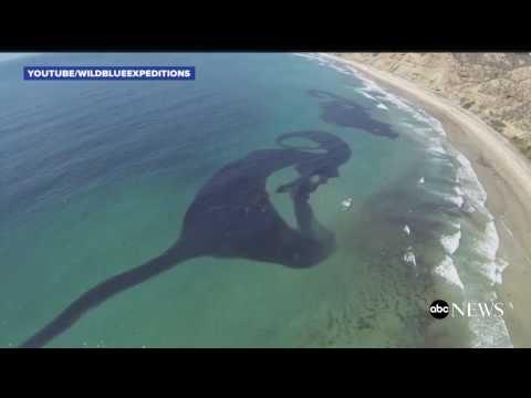 Millions of Sardines Cloud San Diego Coast
