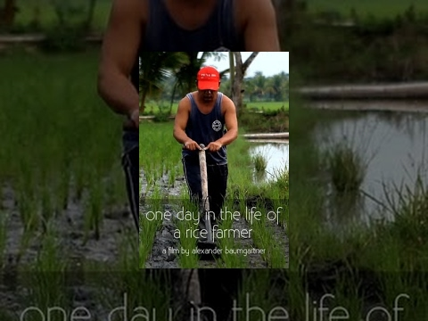 One Day in the Life of a Rice Farmer