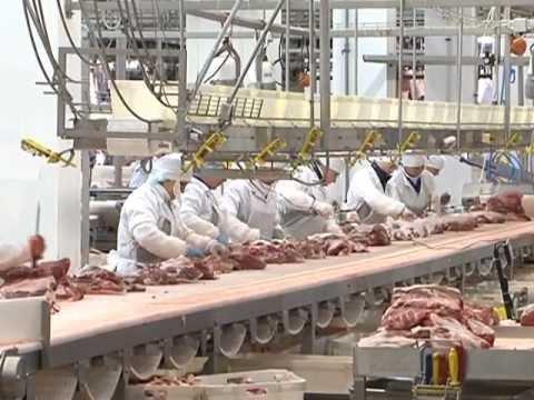 Мясоперерабатывающее предприятие Мираторга.mpg