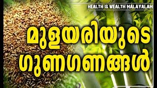 മുളയരിയുടെ ഗുണഗണങ്ങൾ # Bamboo Rice Benefits # Healthy Food Recipes Malayalam # Health Tips Malayalam