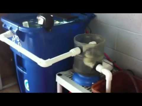 Aquaponics Fish Tank And Swirl Filtration System Youtube