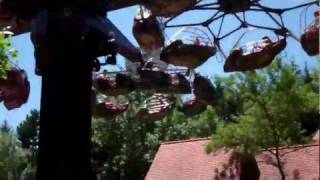 Marineland sky hawk
