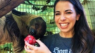 #SlothAndSundry: SLOTHS on Twitch Announcement w/ Laura Bailey!