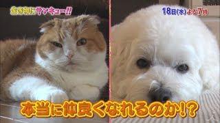 トコトン掘り下げ隊!生き物にサンキュー!!【犬ネコは仲が良い?悪い?】[字]