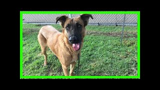 | Dog Rescue StoriesAbandoned In Favor Of A New Dog, Zuzu Will Soon Get The 'Wonderful Life' She ...