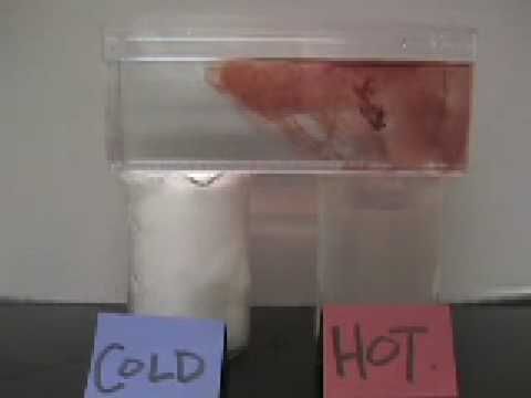 Convection Currents Lab Convection Lab