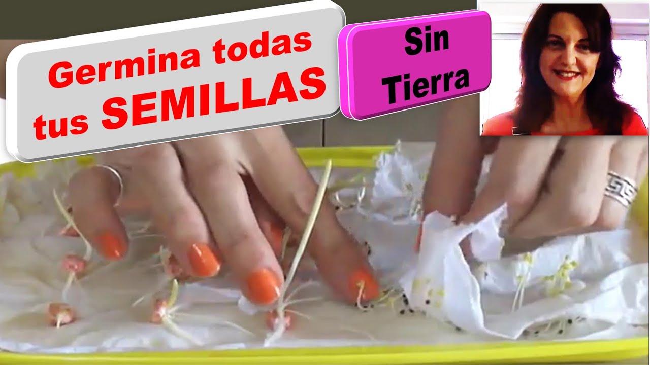 Como hacer germinadores con bandejas f cil vida a lo - Como hacer espaguetis al pesto ...