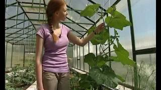 Выращивание дынь - уДачные советы