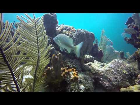 Carnival Freedom Belize 2 Tank Scuba Dive 2016
