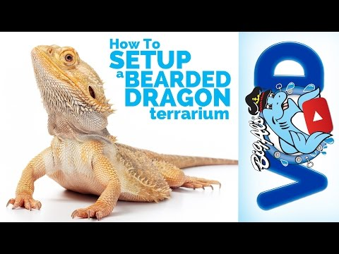 How To Setup a Bearded Dragon Terrarium   Big Al's