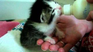 Austin Pets Alive! - Super Cute!  Wilbrina on the bottle