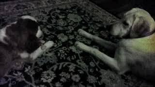 Funny Dogs Hazel & Lennon