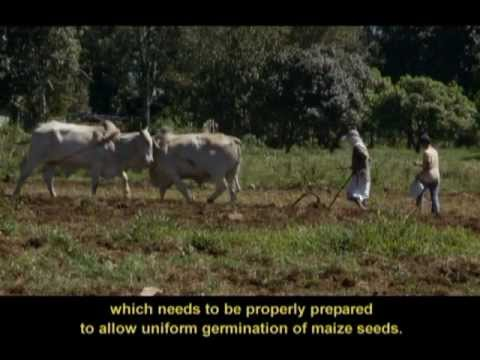Maize BMP (3 of 10) - Land Preparation (Filipino with English subtitles)