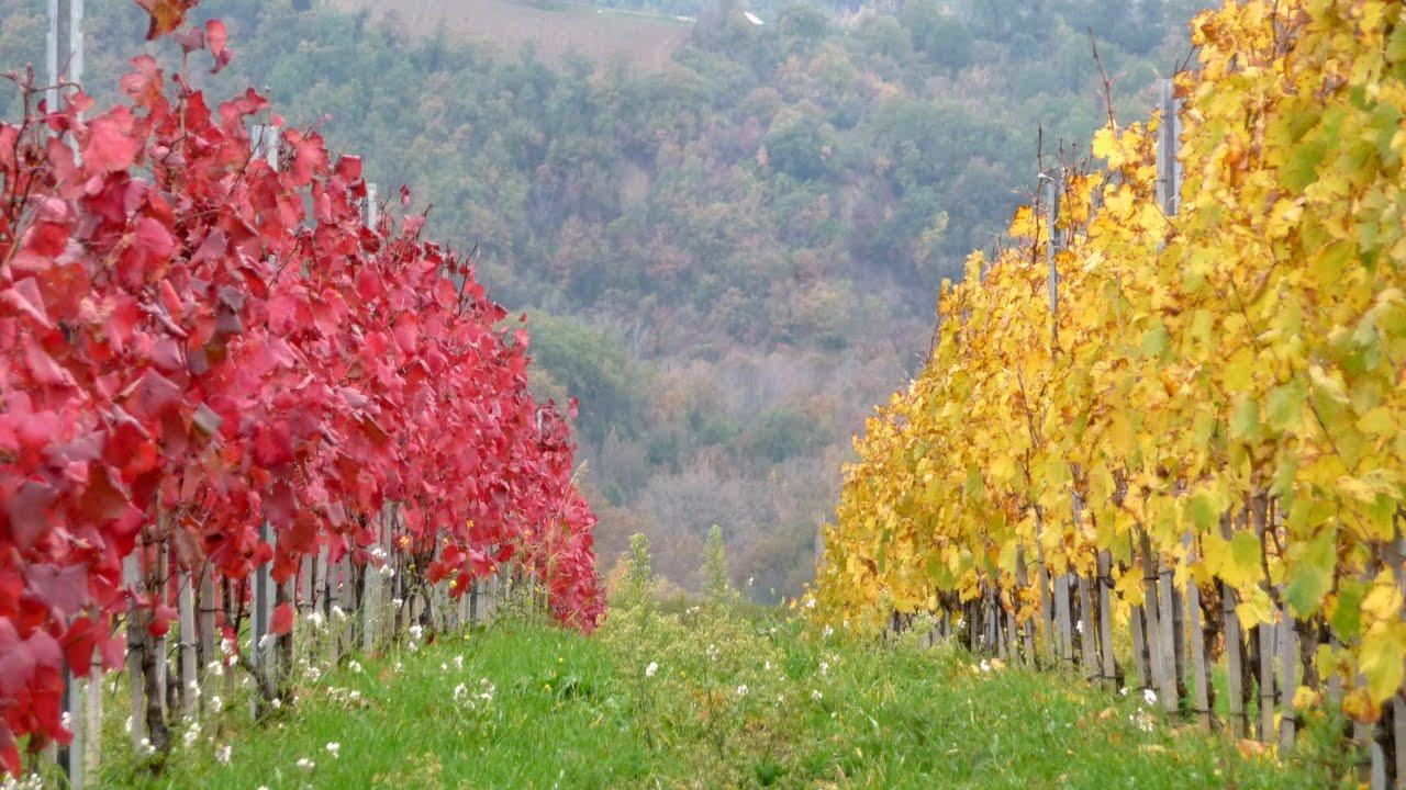 paesaggi umbri in autunno umbria full hd youtube