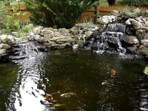 Pond with bog filtration and aquatic plants youtube for Koi pond bog filter