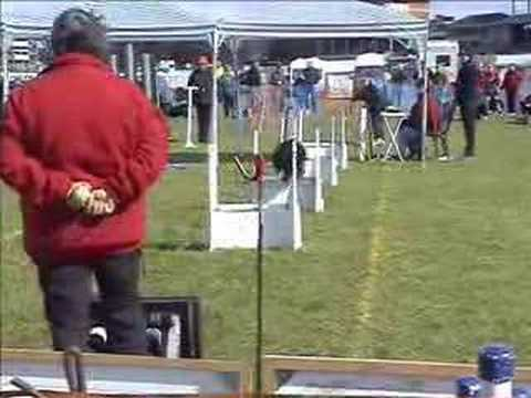 Flyball - what's it all about