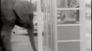 Candid Camera Classic: Fun with Animals