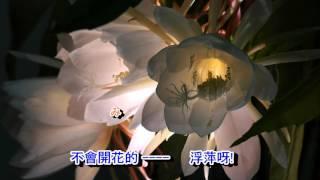 01 016 みちづれ 小林幸子 國語 冬戀 山茶花 音緣 2299 金嗓 40299