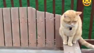 Коты против собак 2