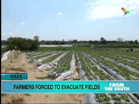 Gaza farmers feel brunt of Israeli cease-fire violations