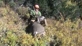 40-mule-deer-sheds-3-years-mossback