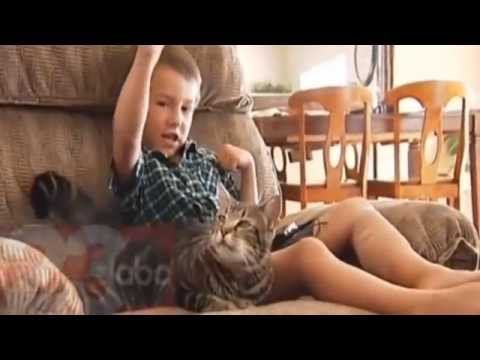 Dog attack victim says cat is his hero | Hero Cat Saves Boy From Dog