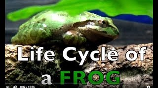 Life Cycle of a FROG - Draw/Color -  Real Frogs - Kid Science