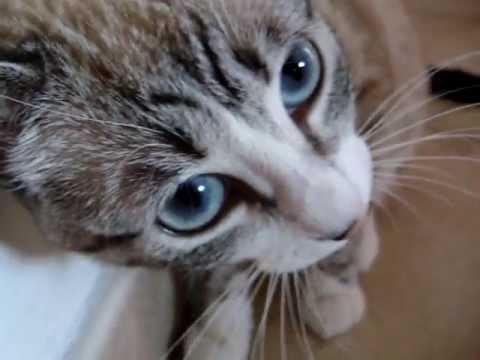 Gatto che parla