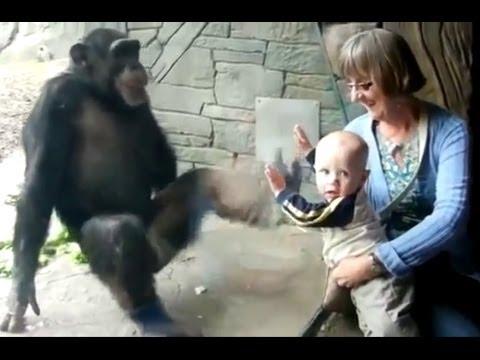 Прикол обезьяна троллит ребёнка в зоопарке Приколы Ржака Юмор