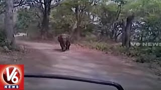 Wild Elephant Chases Tourist In Jim Corbett National Park | Uttarakhand