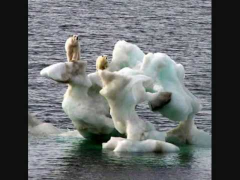 Melting Ice Caps Polar Bears And Melting Ice Caps