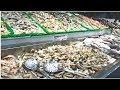 ന്യൂയോർക്കില്ലേ ഒരു ഫിഷ് മാർക്കറ്റ്   Fish Market in New York