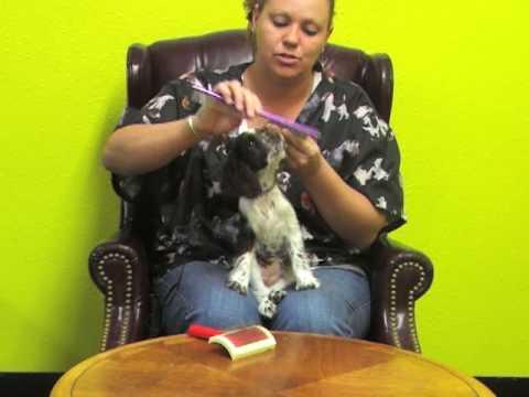 Villa La PAWS Puppy Grooming - Michela Watkins