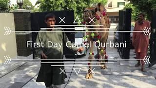 Professional Qurbani 2016