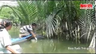 Phát hiện xác chết nổi lềnh bềnh giữa rừng dừa nước   Clip vn