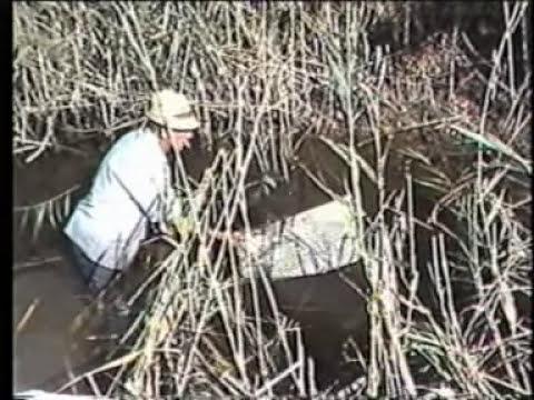 Pesca amb nansa