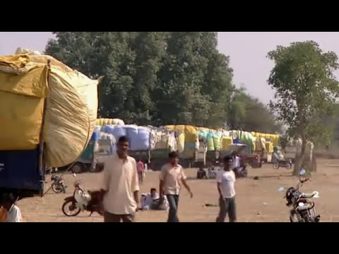 Suicidios por el Algodon Transgénico en India. Del documental