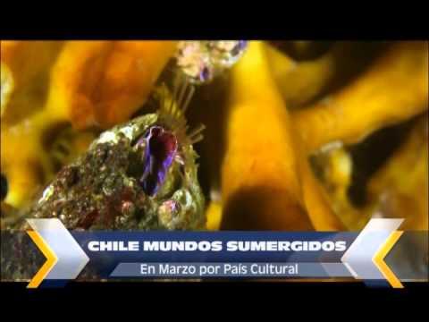 Chile Mundos Sumergidos Promo 01 Chile Mundos